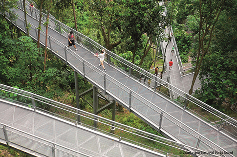 southern-ridges-canopy-walk