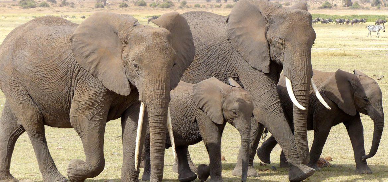 Afryka dzika kusi hunterów. Jak przeżyć niezapomniane safari w Kenii?